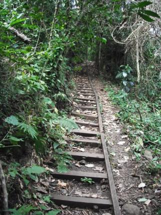 szlak_trail