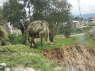 Cajamarca (32)