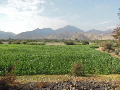 Caral (63)
