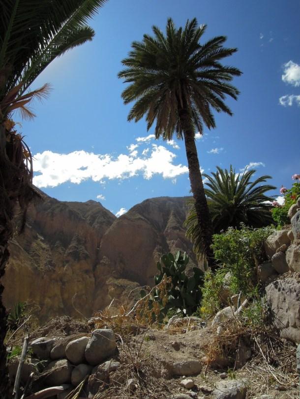Colca kanion_Oasis (1)