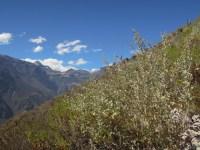 Colca kanion_on the way (17)
