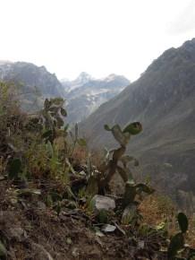Colca kanion_on the way (5)