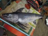 rybka:)_a little fish