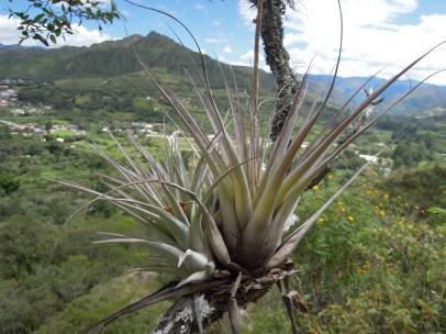Vilcabamba (9)