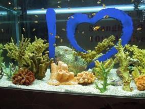 Shanghai Aquarium wita_Welcome to Shanghai Aquarium