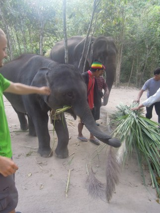 słonie_elephants