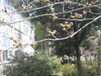 4.10工房桜