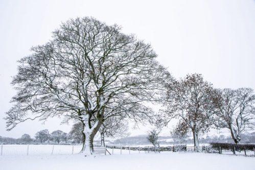 A January snowfall...