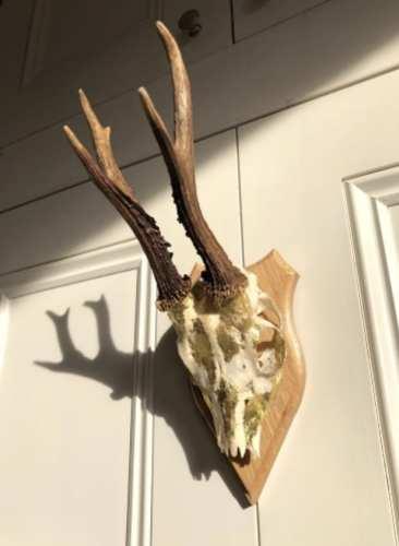 Bone Craft