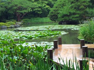 lilly pond, heian Shrine