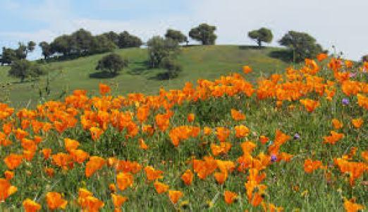 spring in CA