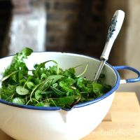 Spring mesclun or foraged greens salad mix