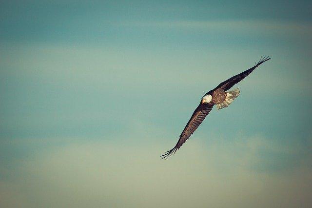 Read more about the article Nous sommes des poussins appelés à devenir des aigles