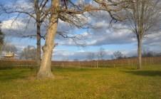 Vineyards - Murphy, NC - #17