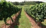 Vineyards - Murphy, NC - #12
