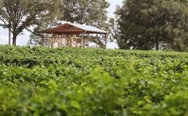 Vineyards - Murphy, NC - #15