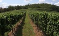 Vineyards - Murphy, NC - #9