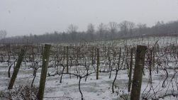 Nottely River Valley Vineyards - Murphy, NC - #4