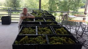 Nottely River Valley Vineyards - Murphy, NC - #7