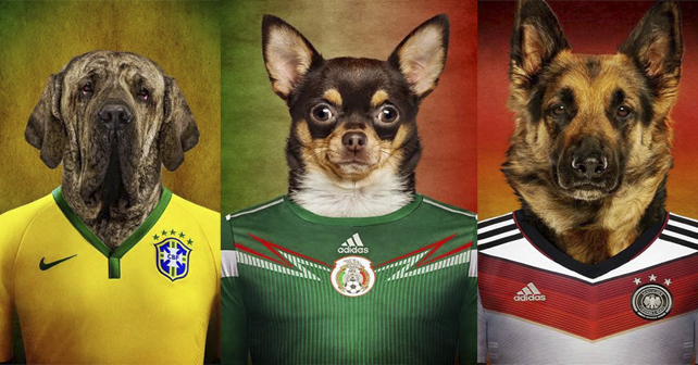 perros mundial brasil