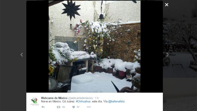 chihuahua neva (6)
