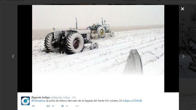 chihuahua neva (7)