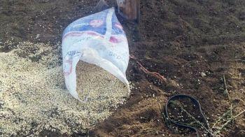 maiz-robado