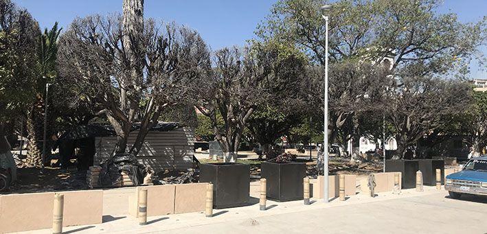 Árboles del jardín Miguel Hidalgo