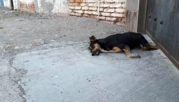 Perro muerto en Santa Ana Pacueco