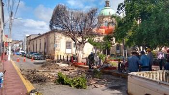 árboles caídos y secos abasolo (2)