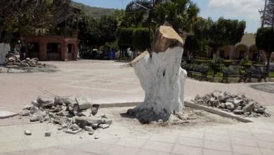 Photo of Mueren árboles del jardín principal de Huanímaro por plagas