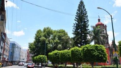 Photo of Brindan con campañas de reforestación árboles de mayor calidad