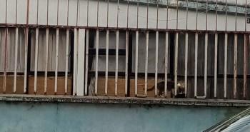 casa-gatos-irapuato-2