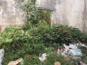 basura inmueble abandonado abasolo (2)