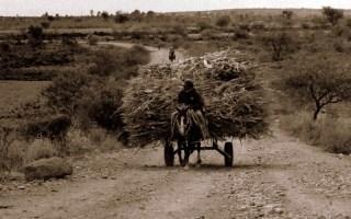 vida en el campo, Fotos juan López Luna y ADP. Fotos antiguas de Irapuato (16)