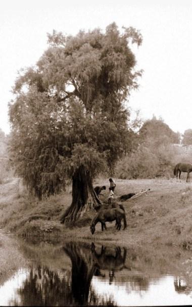 vida en el campo, Fotos juan López Luna y ADP. Fotos antiguas de Irapuato (18)