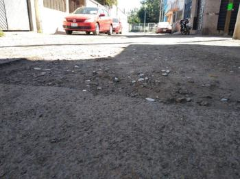 baches aguacate (2)