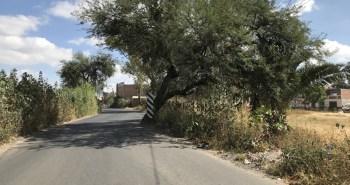 mezquites danados camino improvisado cibeles villas (1)
