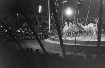 circo irapuato (22)