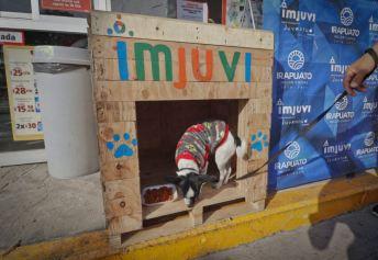 Casas para Perritos en Situación de Calle (1)