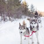 Winterdance Dog Sledding in Haliburton