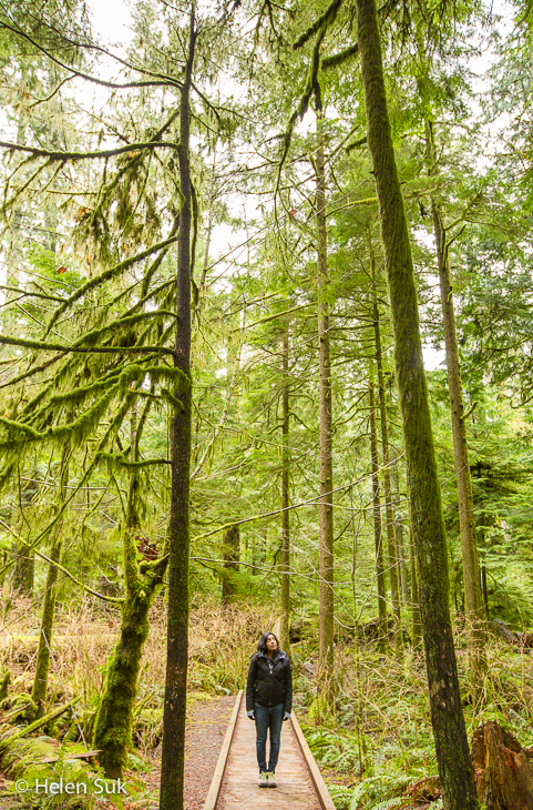 cathedral grove, macmillan provincial park, forest