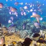 Aqaba: Where Jordan Meets the Red Sea
