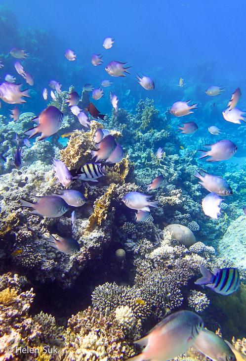 jordan aqaba, red sea