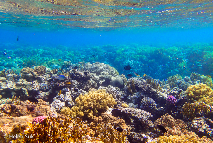 red sea jordan, japanese garden, aqaba