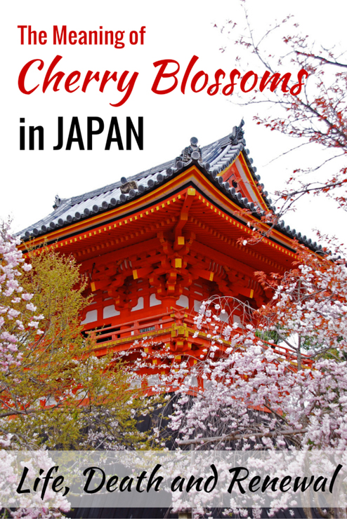 cherry blossom meaning in japan