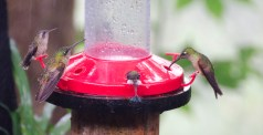 Hummingbirds in the rain.
