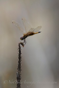 A dragon fly seen from the patio.