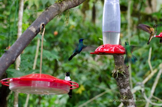 The feeders at the Bellavista Lodge are a constant source of entertainment.