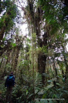 Cloud Forest as seen from one of the trails at the Bellavista Reserve.